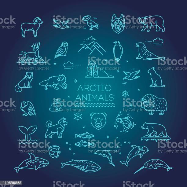 Line arctic wildlife concept with different north animals vector vector id1146296587?b=1&k=6&m=1146296587&s=612x612&h=srifhojobisqedneoqy f54bsq2lpn fxutwietru1u=