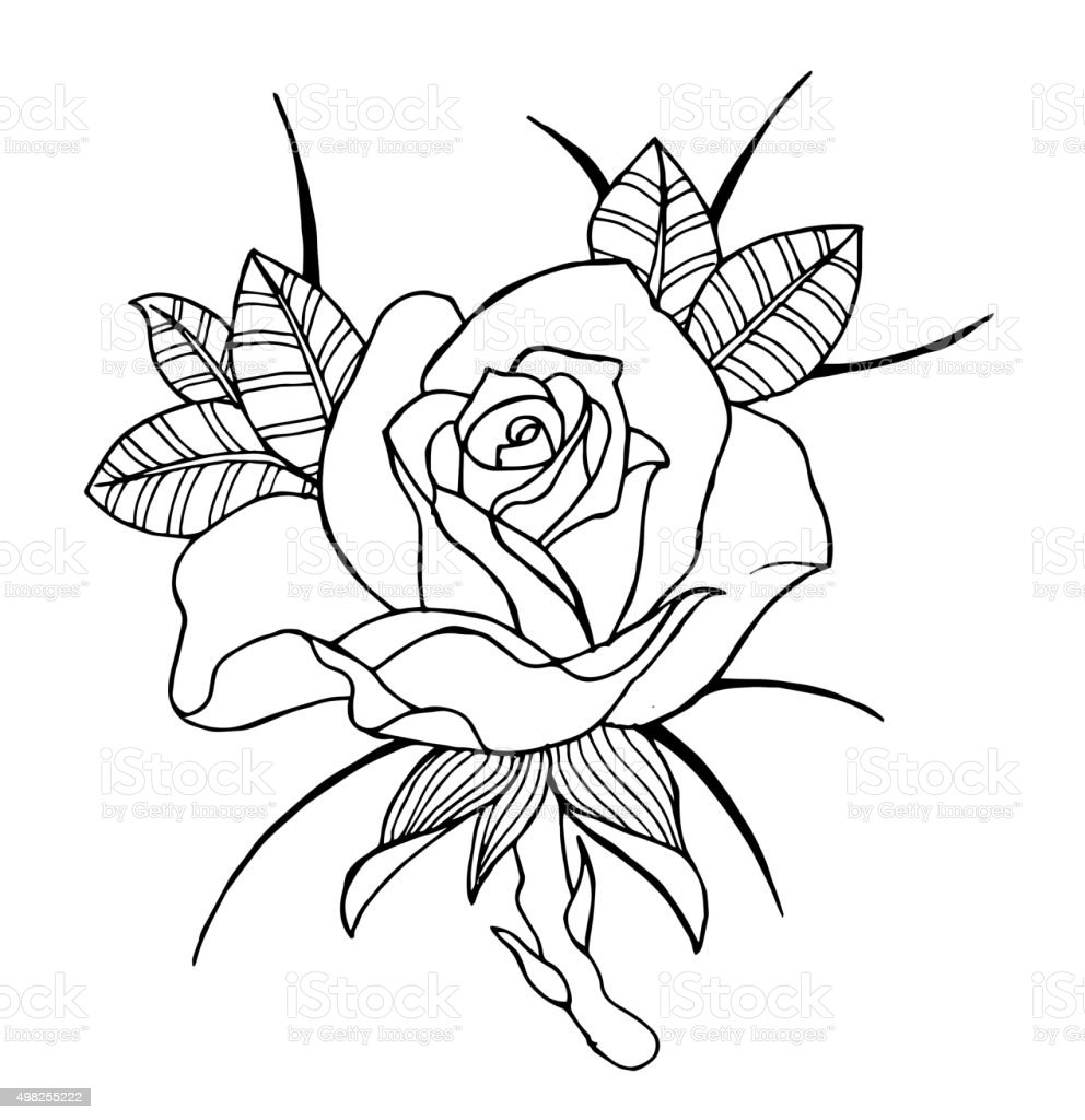 Line Art Rose Flower : Line art flowers roses and peonies stock vector more