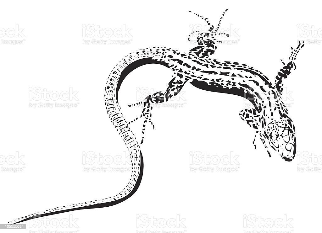 Line Art Illustration of Lizard royalty-free line art illustration of lizard stock vector art & more images of animal