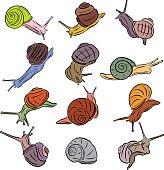 Line Art Illustration Snail Vectors Coloured