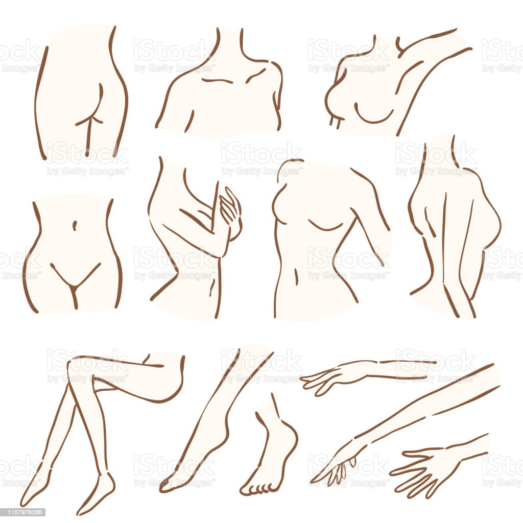 Line Art Of Womens Body Parts Stock Illustration Download Image Now Istock