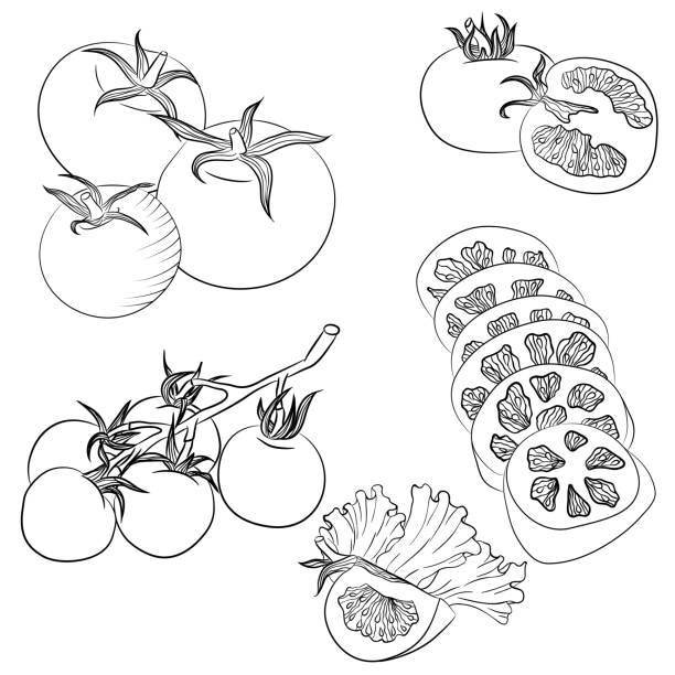 line art various tomatoes - cherry tomato stock illustrations