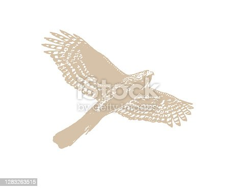 istock Line art vector of a Cooper's Hawk flying 1283263515