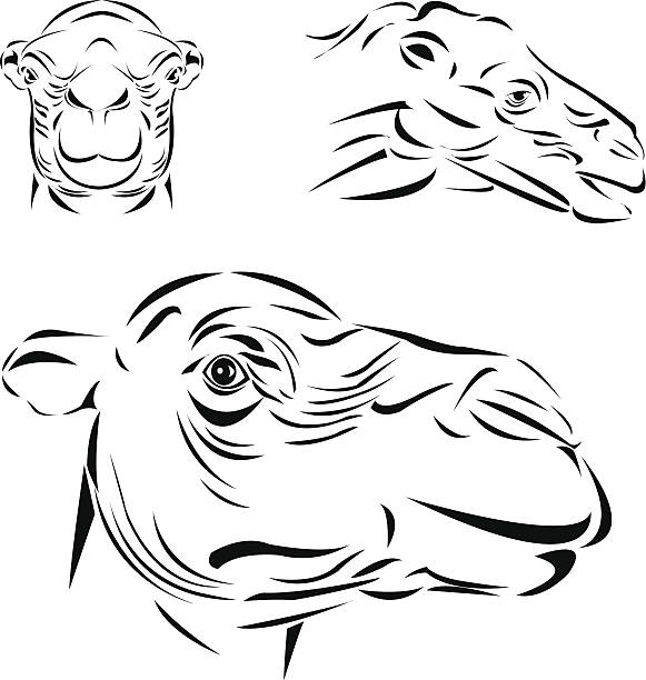 Funny Camel Face Drawing Illustrations, Royalty-Free Vector