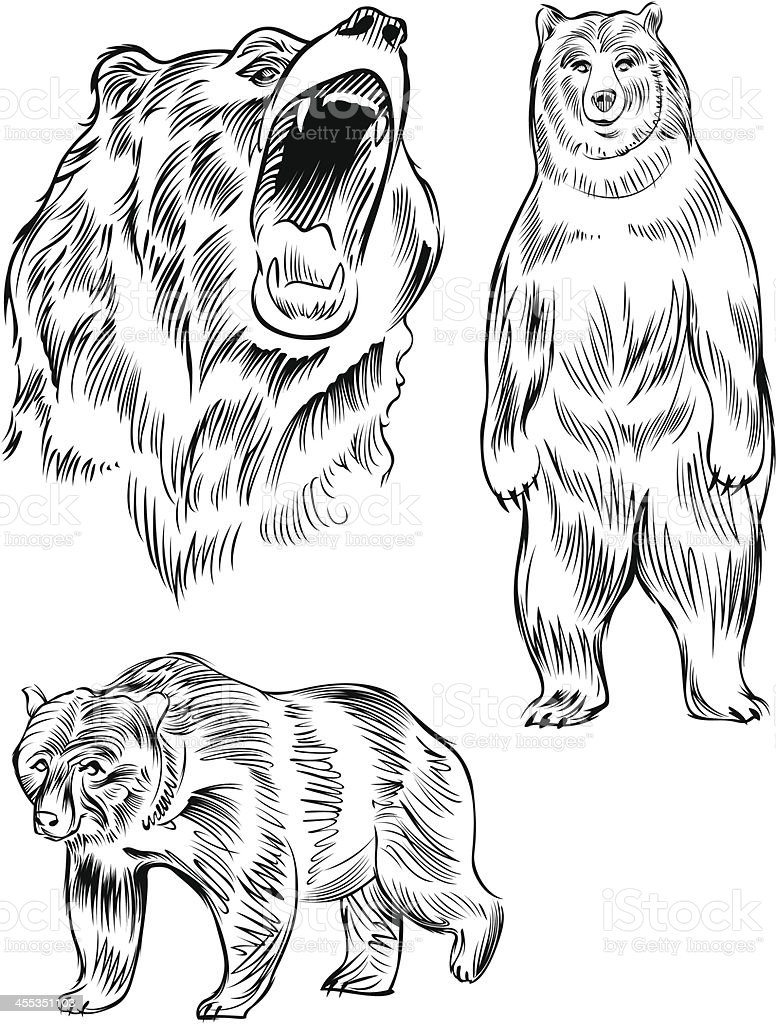 royalty free roaring bear clip art vector images