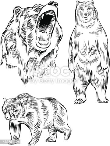 line drawing of a bear stock vector art 455351103 istock