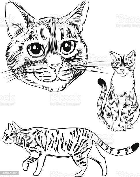 Line drawing of a cat vector id455459029?b=1&k=6&m=455459029&s=612x612&h=4edyyu4bfrculodk0i 9xq3 oi2r8xbd8mtl0zsm gs=