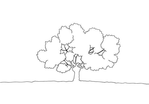 illustrazioni stock, clip art, cartoni animati e icone di tendenza di line drawing of a tree - forest bathing
