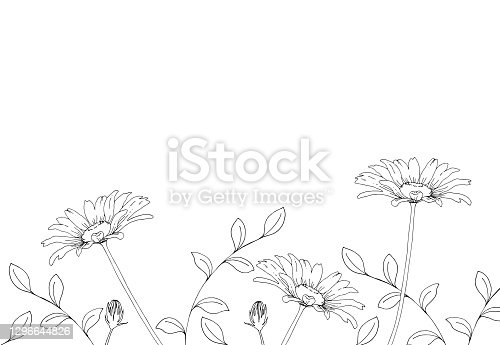 istock Line drawing of daisy flower 1296644826