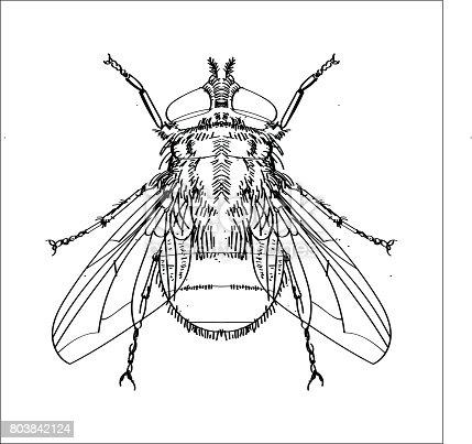 Ilustración de Dibujo De Mosca Línea Simple Vector y más banco de ...
