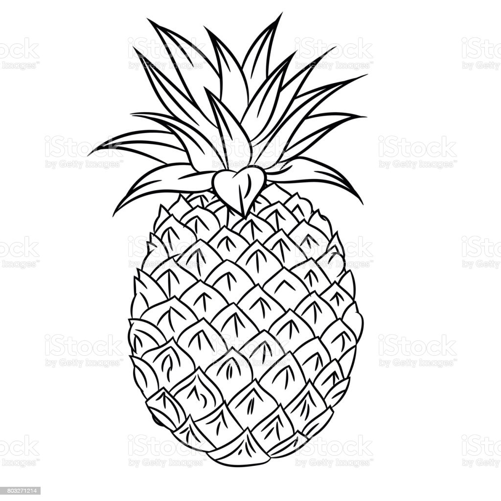 Line Drawing Of Pineapple Simple Line Vector Stock ...