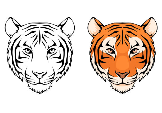 line illustration of a tiger head - tiger stock illustrations, clip art, cartoons, & icons