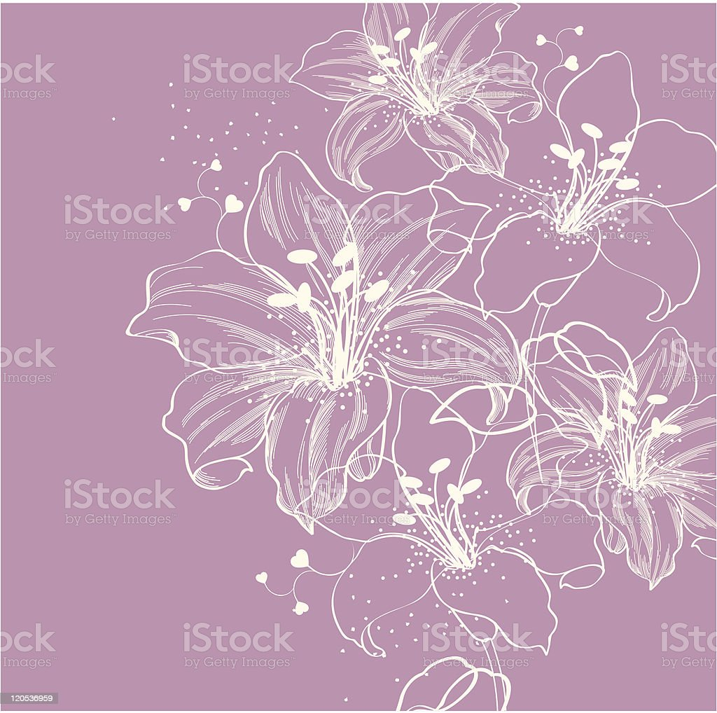 Line illustration of blooming lilies on lavender vector art illustration