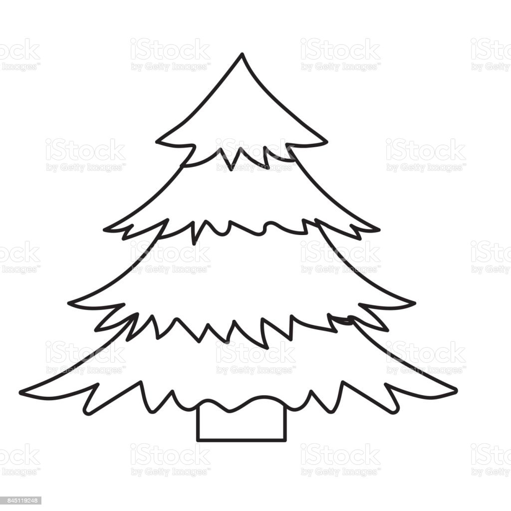 line natural pine tree with branches design vector art illustration