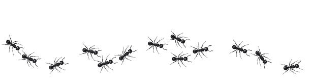 A line of worker ants marching in search of food. Vector banner A line of worker ants marching in search of food. Vector banner ant stock illustrations