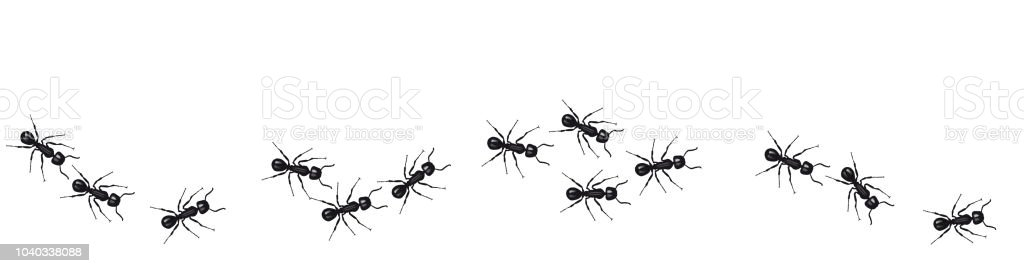 A line of worker ants marching in search of food. Vector banner vector art illustration