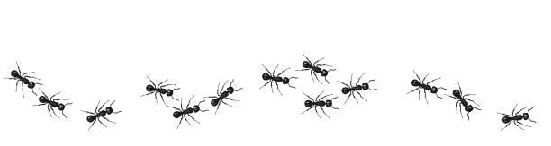 ilustrações de stock, clip art, desenhos animados e ícones de a line of worker ants marching in search of food. vector banner - inseto himenóptero