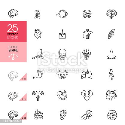 Line Human Internal Organ Icons. Editable Stroke.