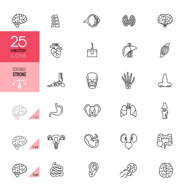 Line Organ Icon Set. Editable Stroke. vector art illustration