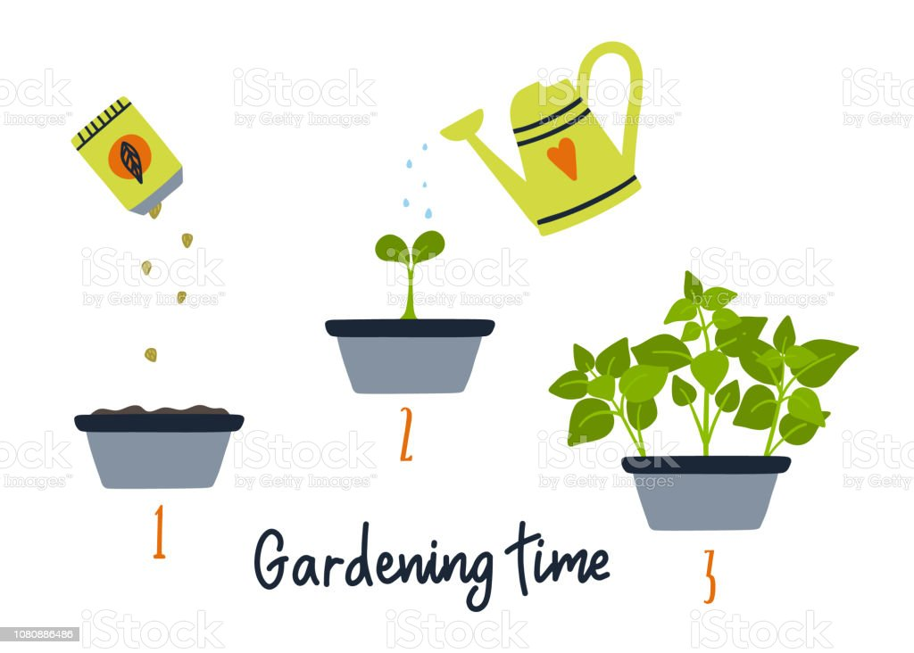 ライン スプラウト植物が育っていますガーデニング イラストプロセスを植