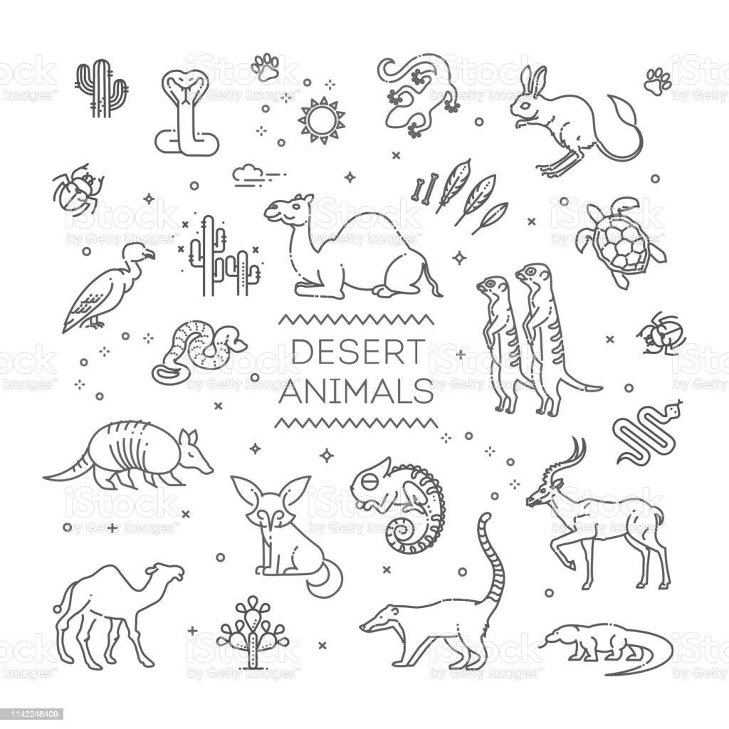 Line wildlife concept with different desert animals . Vector...