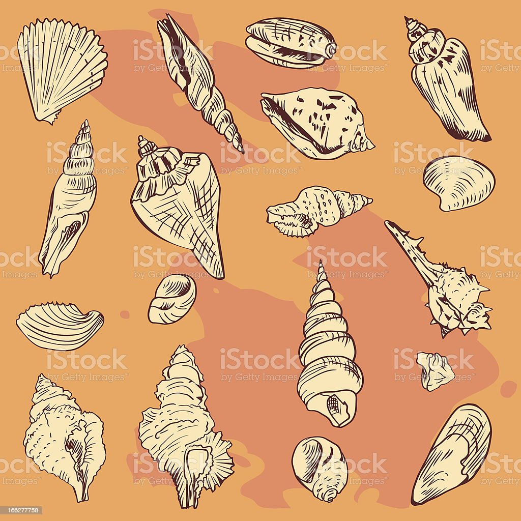 linear drawing shells royalty-free linear drawing shells stock vector art & more images of abstract