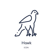Linear hawk icon from Animals and wildlife outline collection. Thin line hawk vector isolated on white background. hawk trendy illustration