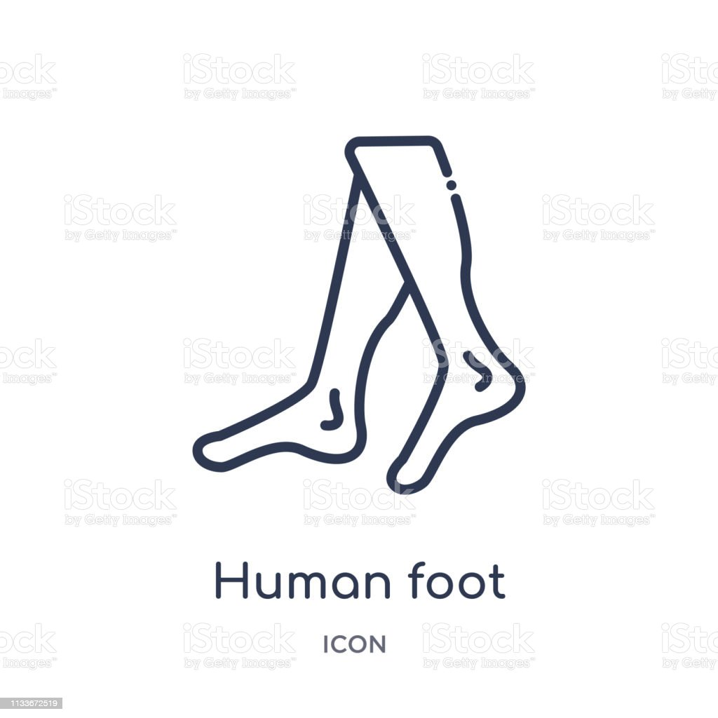 Linear human foot icon from Human body parts outline collection. Thin...