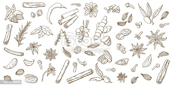 Linear set of various spices. Line art. White background, isolate. Vector illustration.