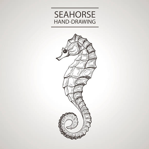 linear silhouette linear silhouette stylized sea horse isolated on light background. Sketch handmade -  Stock Vector sea horse stock illustrations