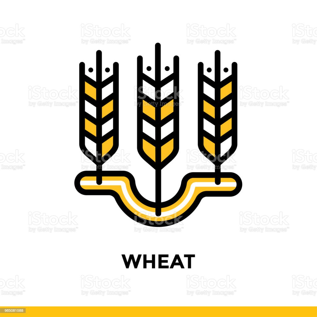 Linear WHEAT icon. Vector elements suitable for website and presentation royalty-free linear wheat icon vector elements suitable for website and presentation stock vector art & more images of bakery