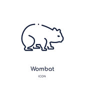 Linear wombat icon from Animals and wildlife outline collection. Thin line wombat vector isolated on white background. wombat trendy illustration