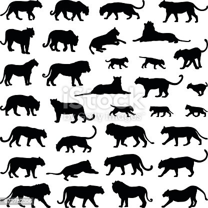 Lion and big cat collection - vector silhouette illustration