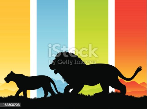Lion and lioness silhouette walking in the wild.