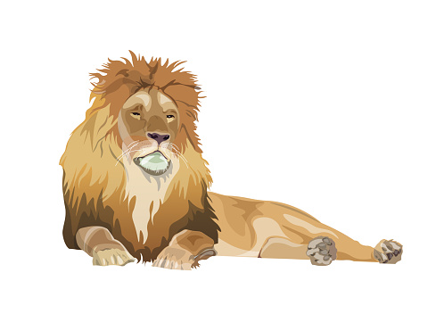 Lion lying down, vector image in realistic style