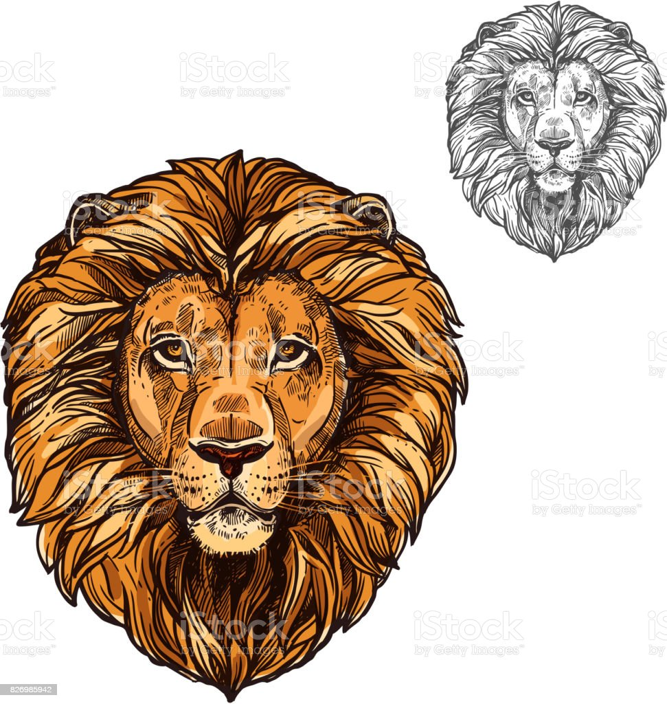 Lion muzzle African wild animal vector sketch icon vector art illustration
