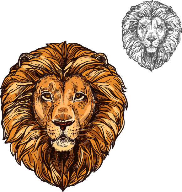 lion muzzle african wild animal vector sketch icon - lion stock illustrations, clip art, cartoons, & icons