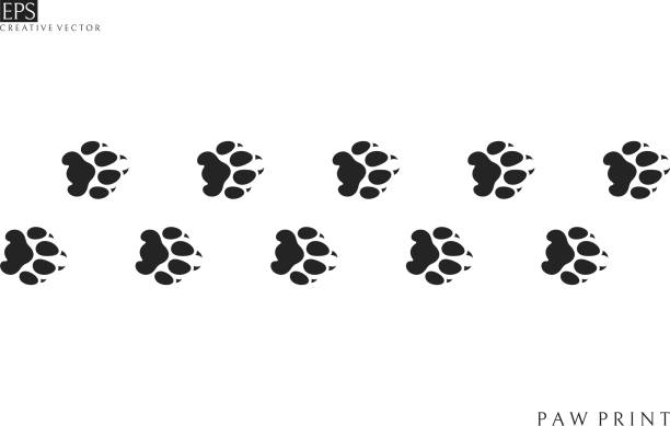 157 White Lion Silhouette Illustrations Royalty Free Vector Graphics Clip Art Istock Polish your personal project or design with these lion silhouette transparent png images, make it even more personalized and more attractive. 157 white lion silhouette illustrations royalty free vector graphics clip art istock