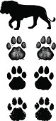 Vector Lion paw prints or spoor drawn in three graphic styles - sketchy, plain and grunge.