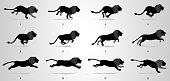 Lion Running animation frames and sprite sheet