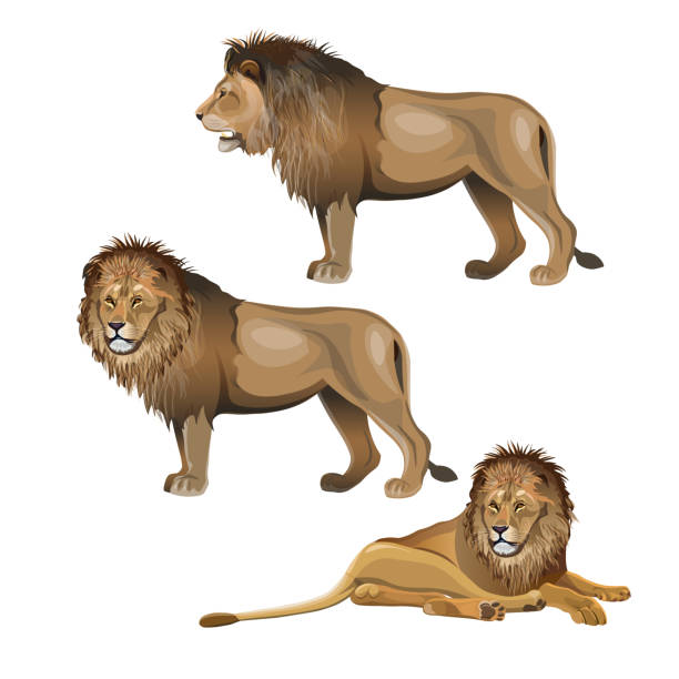 123 Lion Lying Down Illustrations Royalty Free Vector Graphics Clip Art Istock Most preachers, when commenting on this peg the irony meter… because they, say that first give th. 123 lion lying down illustrations royalty free vector graphics clip art istock