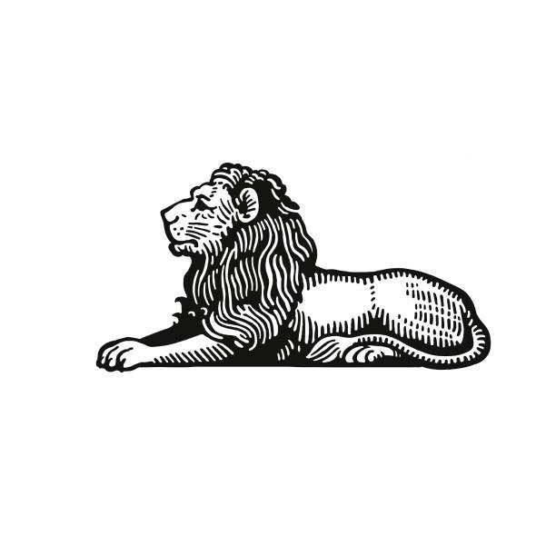 Lion Lion lion stock illustrations