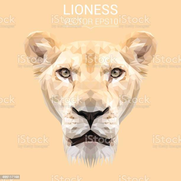 Lioness animal low poly design triangle vector illustration vector id699117168?b=1&k=6&m=699117168&s=612x612&h= efgoqh5mitg6yeqxmf0dqfqfhi4hvhy2x3lsz6yxdm=