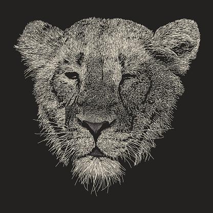 Lioness Face Portrait