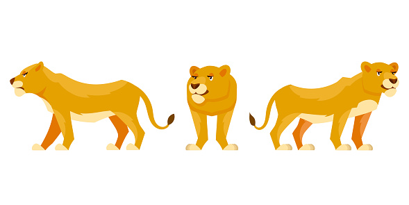 Lioness in different poses.