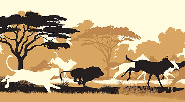 stockillustraties, clipart, cartoons en iconen met lions hunting wildebeest - roofdieren