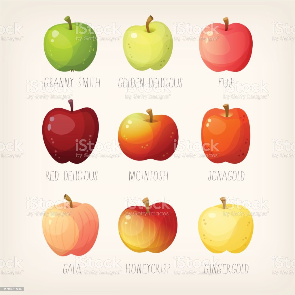 Liste der Äpfel – Vektorgrafik