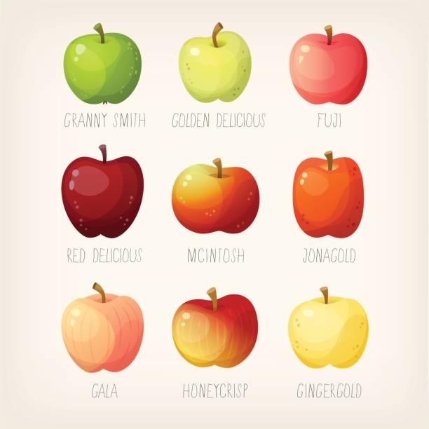 illustrations, cliparts, dessins animés et icônes de liste des pommes - golden