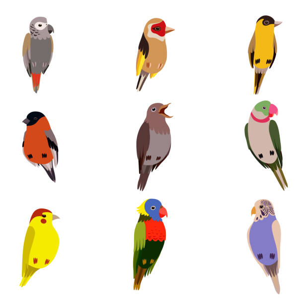 Little Birds Set, Amadin, Bullfinch, Canary, Parrot, Nightingale, Goldfinch, Budgerigar, Cute Home Pets Vector Illustration Little Birds Set, Amadin, Bullfinch, Canary, Parrot, Nightingale, Goldfinch, Budgerigar Cute Home Pets Vector Illustration on White Background gold finch stock illustrations