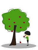 Little boy eating apples under the apple tree - Full Color